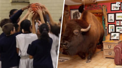 Highs and Lows: Basketball team fighting for unity, family with a pet bison