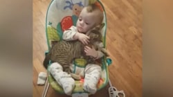 Snuggling little boy and kitten is the sweetest cuddlefest