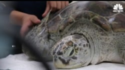 'Lucky Coins' Inadvertently Kill Sea Turtle