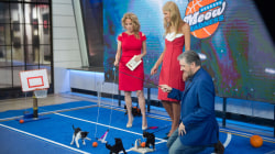 Beth Stern introduces the adorable feline basketball stars of 'Meow Madness'