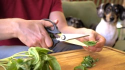 Check out these surprising uses for kitchen scissors