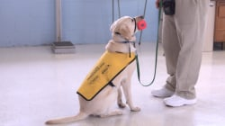 Prison inmates train service dogs to aid wounded military vets