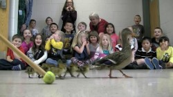 Kindergarteners Watch Annual Duck Parade