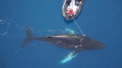 Scientists Mount Cameras to Whales to Learn About Antarctic Voyages