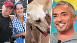 'Dog Whisperer' Cesar Millan helps military veteran with service dog problem