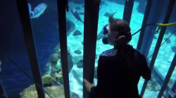 Sharks Are Therapeutic For These Wounded Warriors