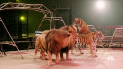 The End of Ringling Bros. and Barnum & Bailey Circus