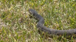 Snakes Shut Down the Mail in a Kentucky Neighborhood