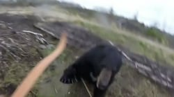 Caught on video: Man faces attacking bear armed only with bow and arrow