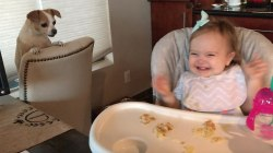 Adorable dog and baby play the best game of peekaboo