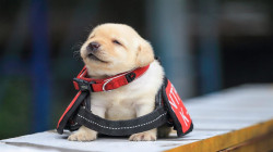 These new police puppy recruits are arrestingly cute
