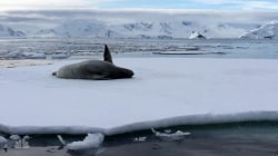 The other animals in Antarctica