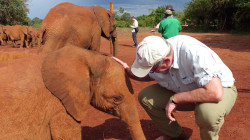 These orphan elephants are getting a second chance at life