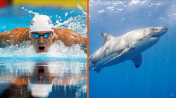 Michael Phelps set to race a shark for 'Shark Week'