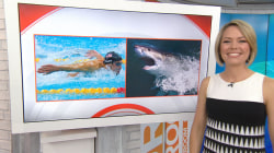 Michael Phelps will swim against a shark: 'Great gold vs. great white'