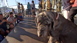 Meet the winner of this year's World's Ugliest Dog Contest