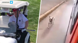 Highs and Lows: Trump's golf course driving, dog chases owner in ambulance