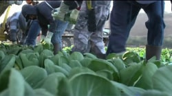 California's Farms Face Serious Labor Shortage