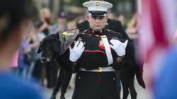 Life well lived: Cena, bomb-sniffing dog who served in Afghanistan, dies