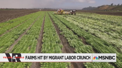 Farms Hit By Migrant Labor Crunch