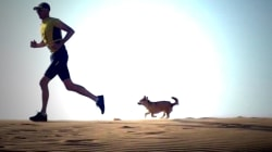 Friendly interruption: How a stray dog changed one athlete's life
