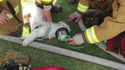 Watch firefighters save a dog trapped in a burning house