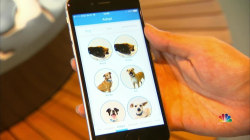 New App Uses Interactive Approach to Pet Adoption