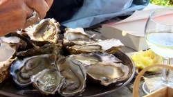 Oyster Vending Machines Installed at French Seaside Resort