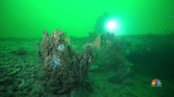 A Look at the Ancient Underwater Forest Found Along Alabama Coast