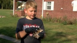 Boy Finds Huge Mastodon Tooth in Grandparents' Backyard