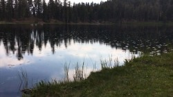 Man's yells cause waters to ripple (with help from insects)