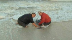 Kerry Sanders saves a dolphin!