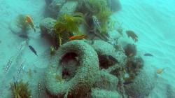 Divers Remove 'Toxic' Experimental Reef off California