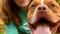 Now you can order a dog walker as easily as an Uber