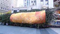 Here's the story behind this year's Rockefeller Center Christmas Tree! See it arrive on the plaza