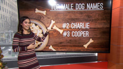 The most popular dog names of the year are…