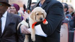 TODAY show's new puppy is named…