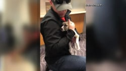 Dogs sent to wrong destinations, Delta Airlines apologizes