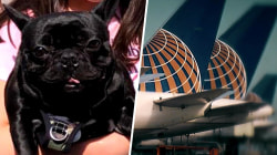 Dog's death on United flight spurs new questions, growing outrage