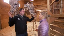 April the giraffe and baby Tajiri celebrate calf's first birthday