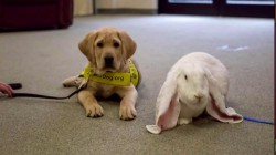 Watch TODAY puppy Sunny meet the Easter Bunny