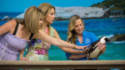 Kathie Lee and Jenna meet African penguin, rescued pelican