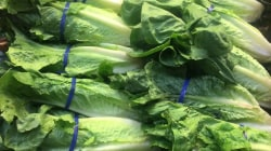 Consumers urged to discard romaine lettuce over E. coli concerns