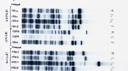 Your DNA is the next big privacy battleground