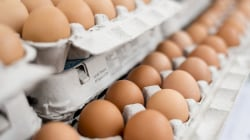 In wake of salmonella outbreak, how to know if your eggs are safe