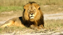 Cecil the lion's death: What really happened