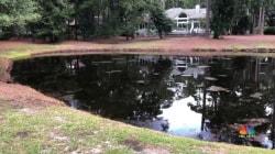South Carolina woman killed by 8-foot alligator