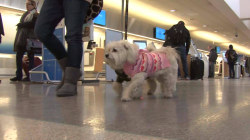 Travel industry cracking down on rules regarding service animals