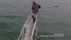 Shark jumps out of water, surprising researcher