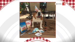 TODAY celebrates beloved pet birthdays: September 19, 2018